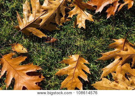 Autumn leafs like frame
