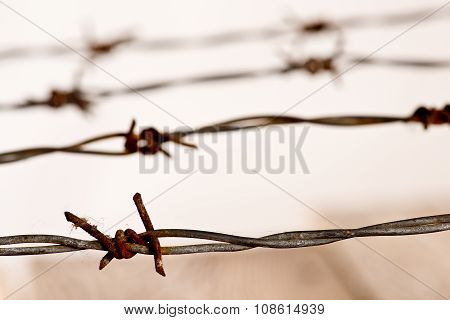 Detail Of Rusty Barbed Wire