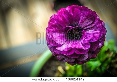 Beautiful Potted Purple Flower