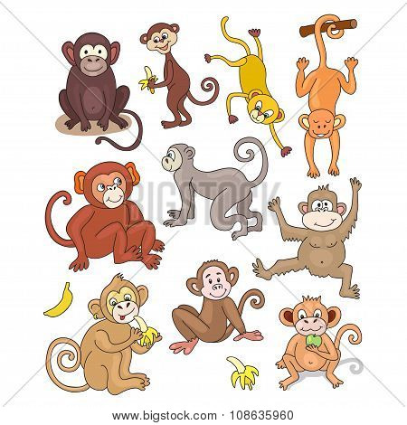 Set of funny monkeys. Cartoon and vector isolated character. Beautiful vector design.