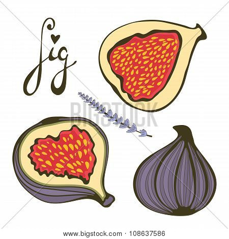 Hand drawn figs and lavender