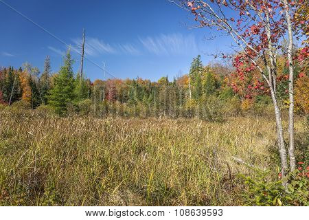 Beaver Meadow In Autumn