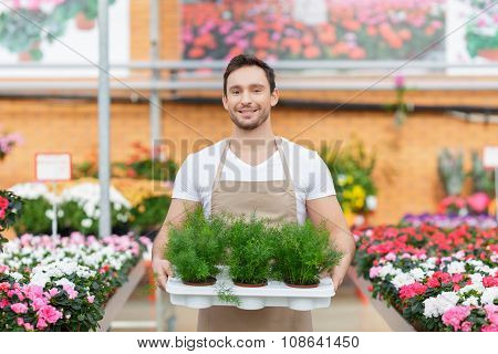 Pleasant flowershop owner holding tray with plants