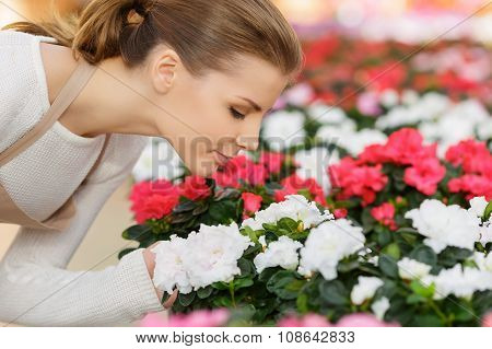 Charming florist smelling flowers