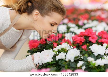 Charming florist smelling flowers