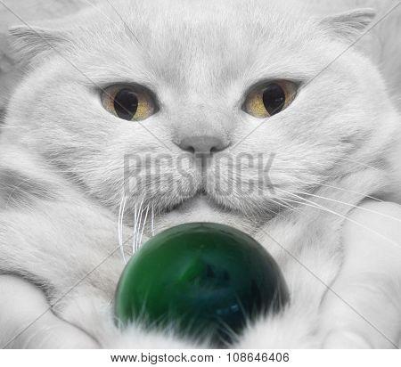 Close-up White Cat