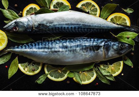 Fresh Raw Mackerel Fish  With Lemon And Bay Leaves