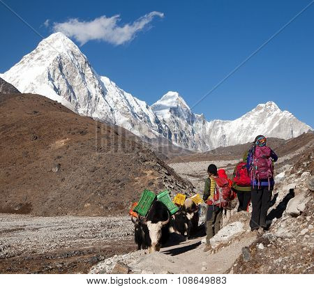 Yaks And Tourists On The Way To Everest Base Camp