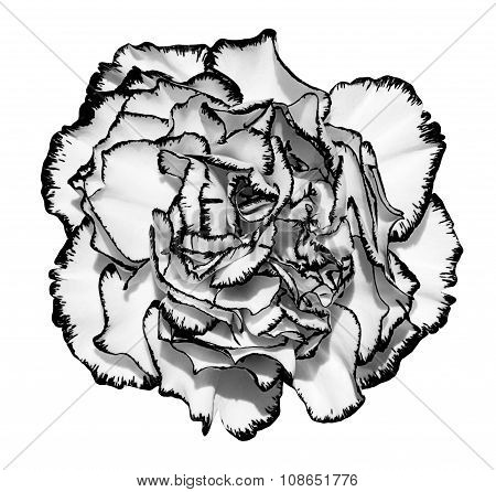 Clove Flower With Edging Black And White Macro Photography Isolated On White
