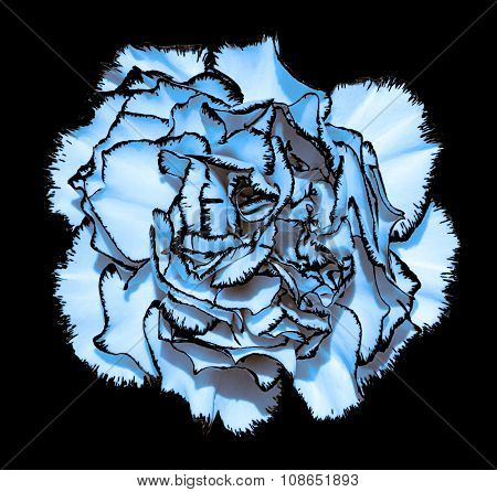 Clove Flower With Blue Petals And Black Edging Macro Photography Isolated On Black Painting Stylized