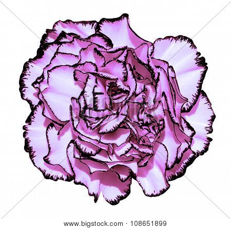 Clove Flower With Violet Petals And Black Edging Macro Photography Isolated On White Painting Styliz