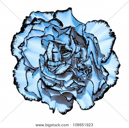 Clove Flower With Blue Petals And Black Edging Macro Photography Isolated On White Painting Stylized