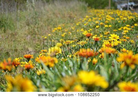 yellow orange flowers in grass