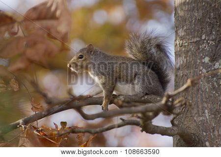 Squirrel Sits On A Branch Amid Autumn Colors