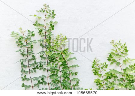 growing plant against white wall