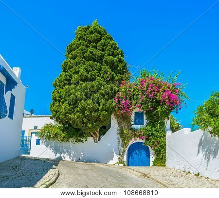 The Landscaping In Sidi Bou Said