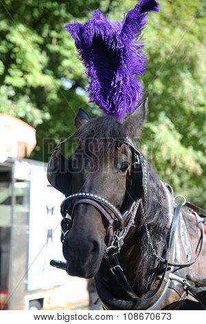 Horse near Central Park on 59th Street