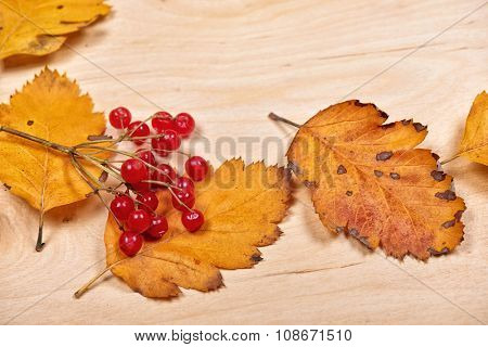 autumn leaves and red berry on wooden background