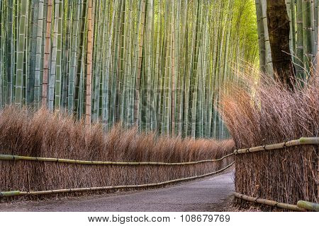 Bamboo Forest Path In Japan