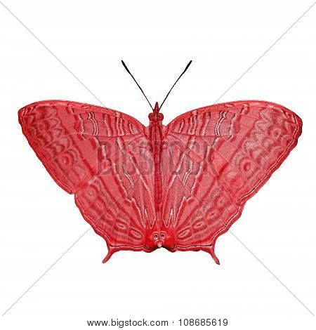 Exotic Color Butterfly  Isolated On White
