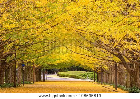 Tokyo, Japan autumn park.