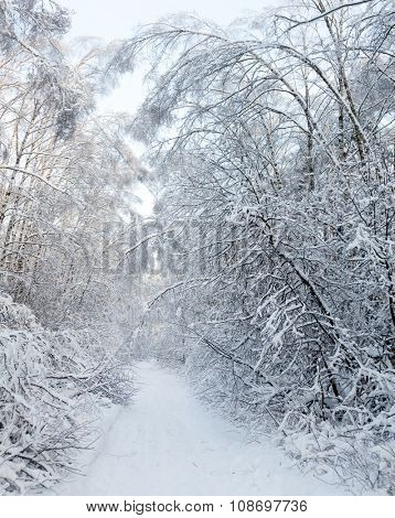 Snowy country road through winter forest