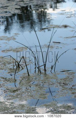 Swamp Grass2