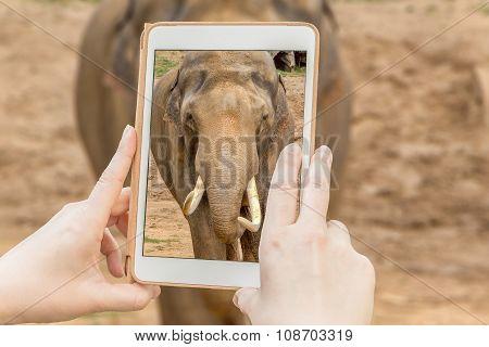 Elephant In A Tabet