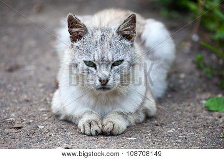 Cat Lying On The Garden Path