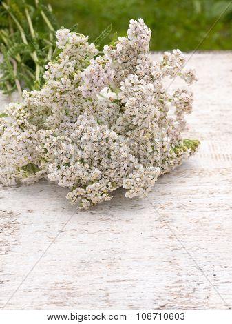 Milfoil Bouquet
