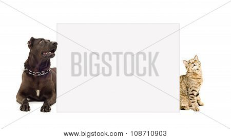 Cat and dog peeking from behind poster