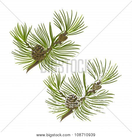 Pine Tree Branch With Pine Cones With Snow Vector
