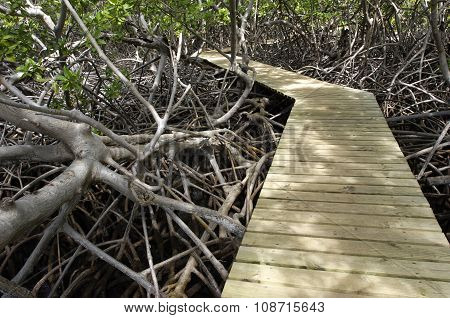Mangrove Swamp In Caravelle Peninsula In Martinique