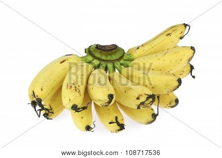 Fresh Dainty Banana On White Background