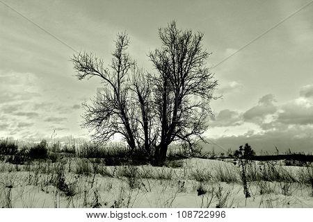 Dormant Tree In Winter Snowy Field