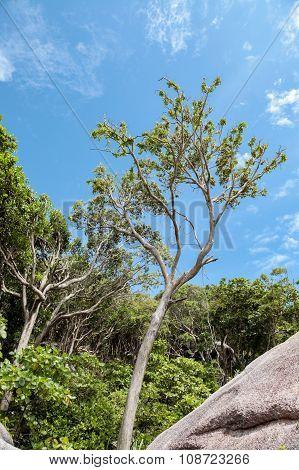 Beautiful Tropical Beach,similan Islands