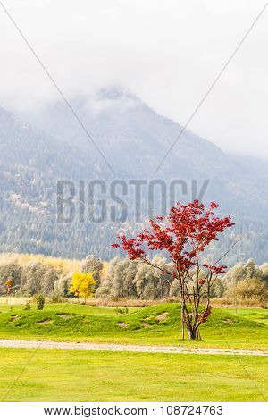 Red Tree In The Field