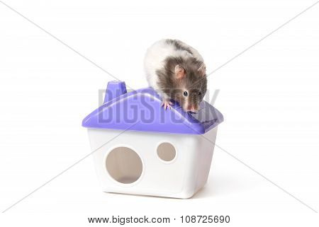 Hamster sits on a roof of the lodge