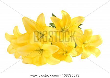 Bouquet of yellow lilies on white