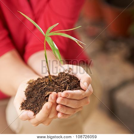 Two hands of a woman with seedling and soil giving safety