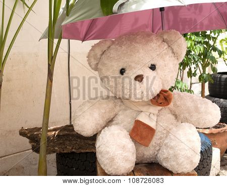 Teddy Bear, Umbrella, Sun Protection.