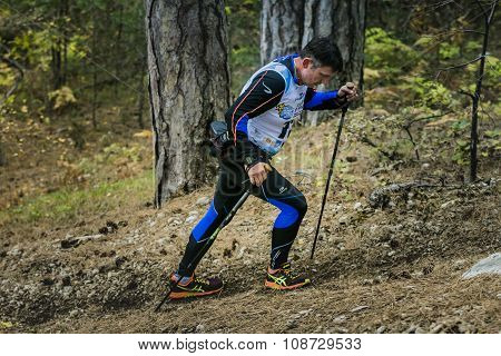 male athlete middle-aged rises along a forest trail with nordic walking poles
