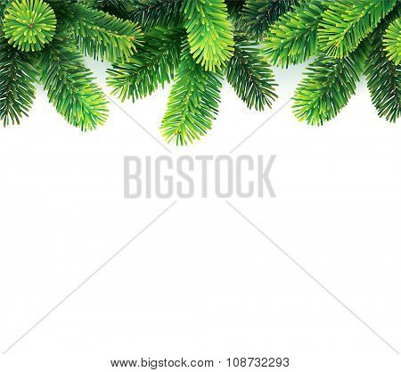 Fir branches on white background. Vector illustration.