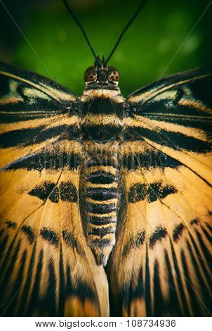 Macro detail of a eastern tiger swallowtail butterfly