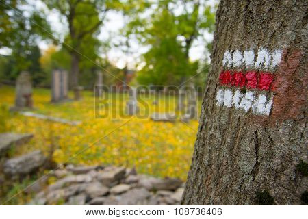 Touristic sign on tree