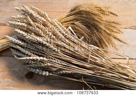 Barley And Wheat