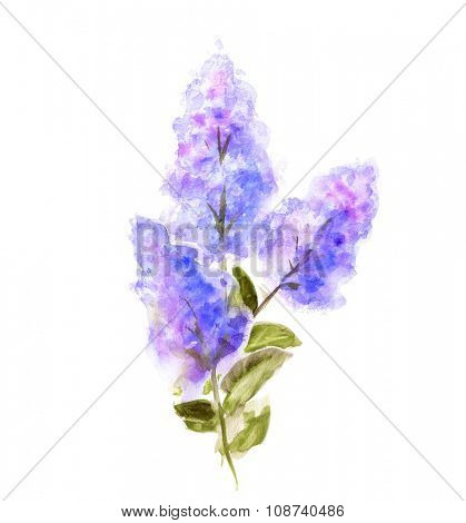 Hand Painted Watercolor Flower Lilac isolated on white. Wet painting illustration