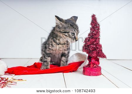 Beautiful cat near Christmas tree