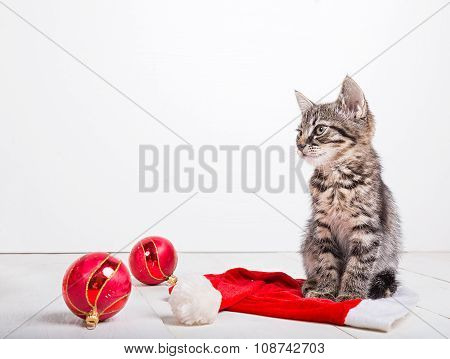 Grey small Christmas kitten sitting