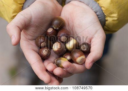 Acorns In The Children's Hands